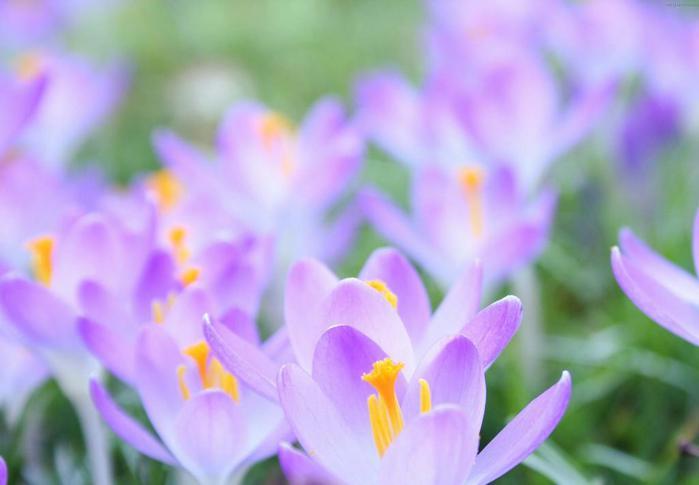 Весна природа красивая 3 (700x485, 26Kb)