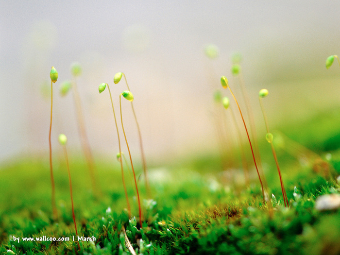 Весна природа красивая 7 (700x525, 129Kb)