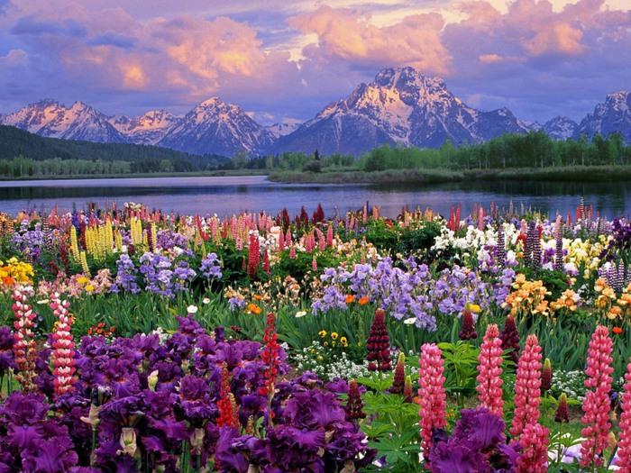 Весна природа красивая 11 (700x525, 165Kb)