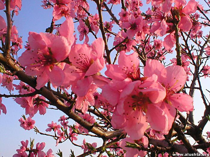 Весна природа красивая 14 (700x525, 95Kb)