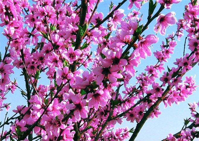 Весна природа красивая 16 (700x495, 123Kb)