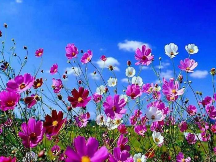 Весна природа красивая 17 (700x525, 68Kb)