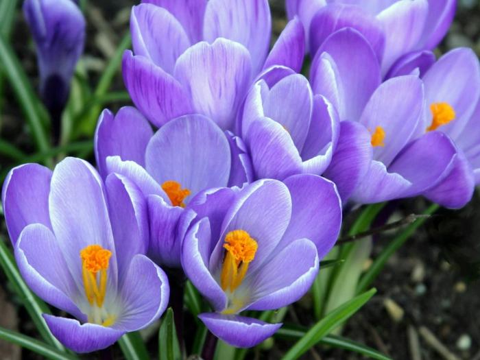 Весна красна комментарии liveinternet