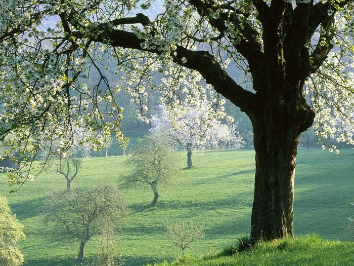Весна природа красивая 23 (700x525, 306Kb)