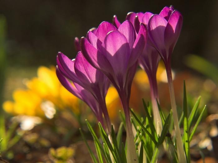 Весна природа красивая 24 (700x525, 228Kb)
