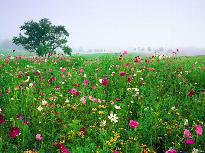 Весна природа красивая 27 (700x525, 102Kb)