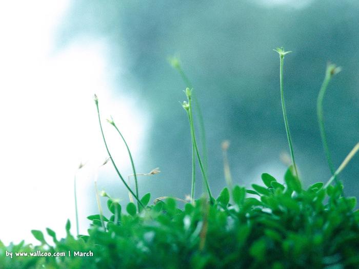 Весна природа красивая 28 (700x525, 112Kb)