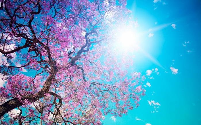 Весна природа красивая 30 (700x437, 211Kb)