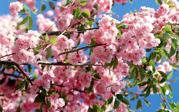Весна природа красивая 31 (700x437, 73Kb)