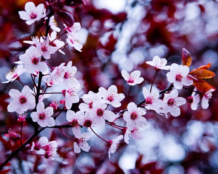 Весна природа красивая 33 700x560 156kb