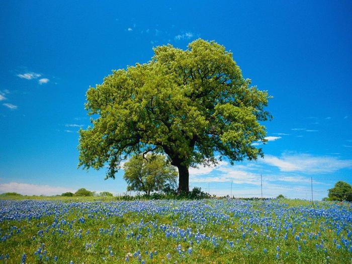 Весна природа красивая 37 (700x525, 79Kb)