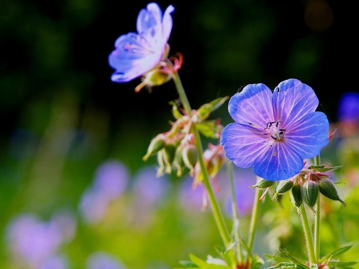 Весна природа красивая 42 (700x525, 215Kb)