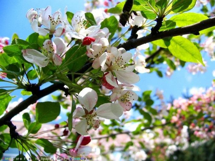 Весна природа красивая 47 (700x525, 137Kb)