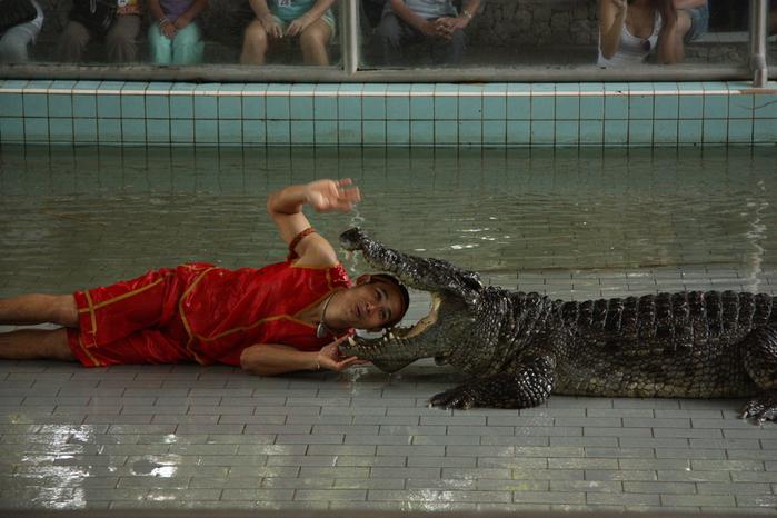 Thailand-Pattaya-Crocodile farm-2012-Изображение 291 (700x466, 238Kb)