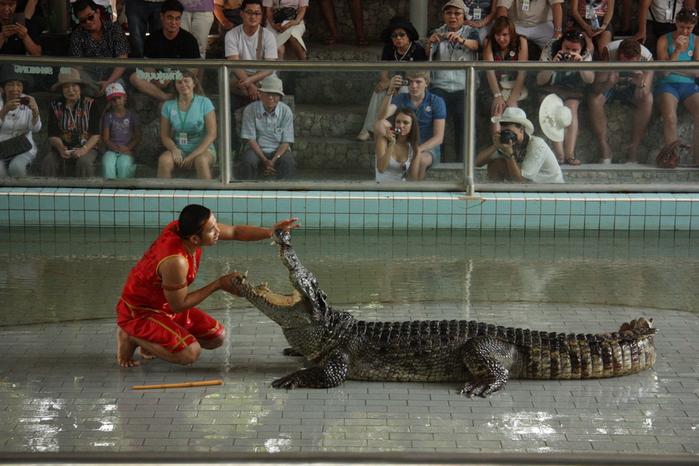 Thailand-Pattaya-Crocodile farm-2012-Изображение 280 (700x466, 258Kb)