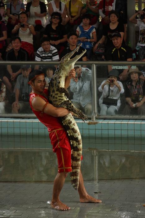 Thailand-Pattaya-Crocodile farm-2012-Изображение 296 (466x700, 236Kb)