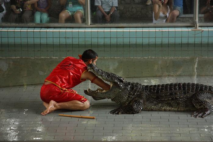 Thailand-Pattaya-Crocodile farm-2012-Изображение 287 (700x466, 241Kb)