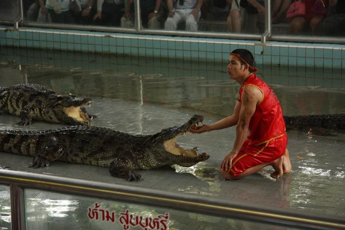 Thailand-Pattaya-Crocodile farm-2012-Изображение 266 (700x466, 229Kb)