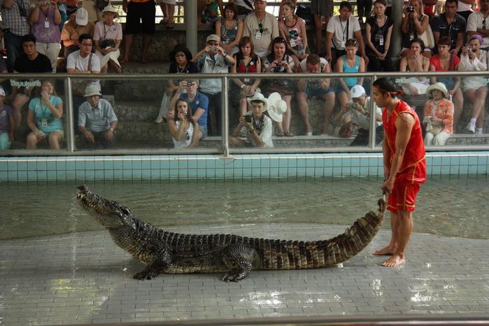 Thailand-Pattaya-Crocodile farm-2012-Изображение 276 (700x466, 271Kb)