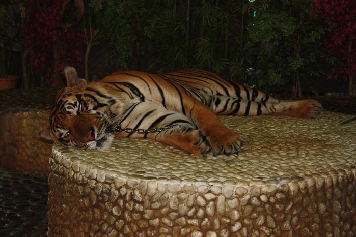 Thailand-Pattaya-Crocodile farm-2012-Изображение 225 (700x466, 243Kb)