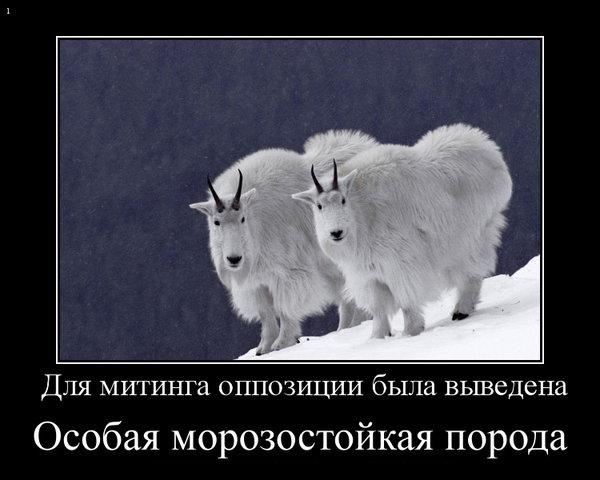 Собчак, Навальный, США, 2012, Чирикова, демотиваторы, выборы, анекдоты, коммунисты,/4800606_s640x480_2 (600x480, 46Kb)
