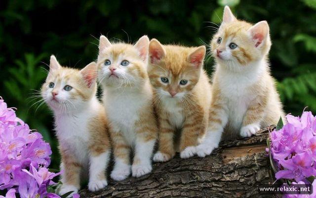 Kittens_087 (640x400, 49Kb)