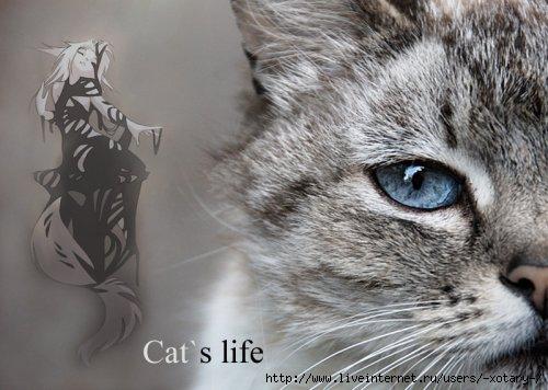 1276363593_cats-life (500x356, 107Kb)