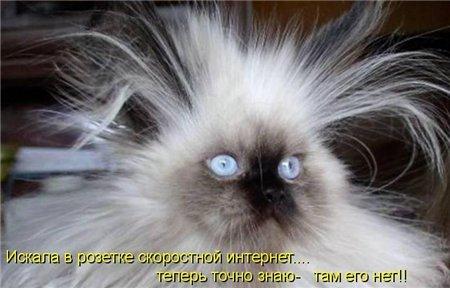 07 кошки приколы 7 (450x288, 30Kb)