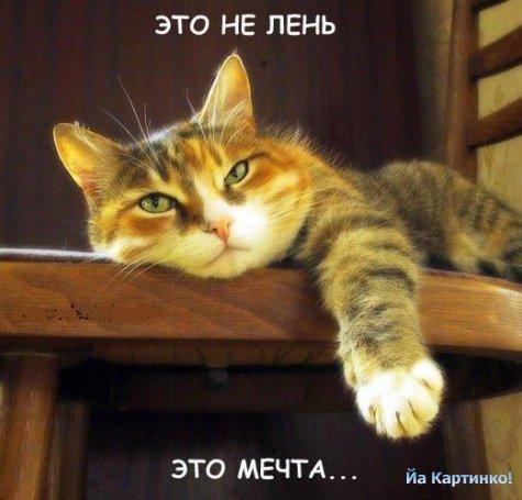 17 кошки приколы 17 (475x455, 42Kb)