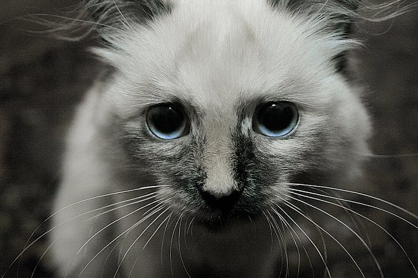 коты приколы 23 (604x402, 80Kb)