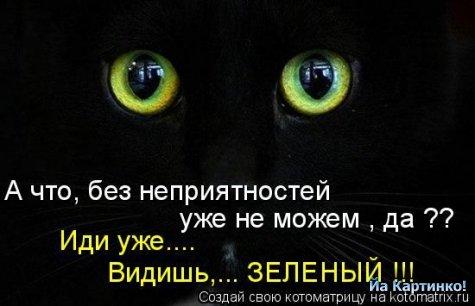 коты приколы 25 (475x306, 28Kb)