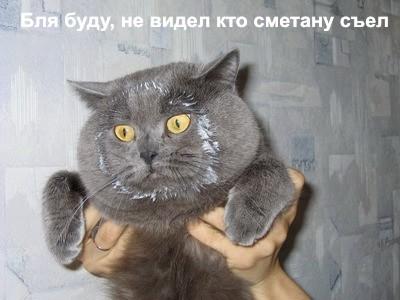 коты приколы 29 (400x300, 45Kb)