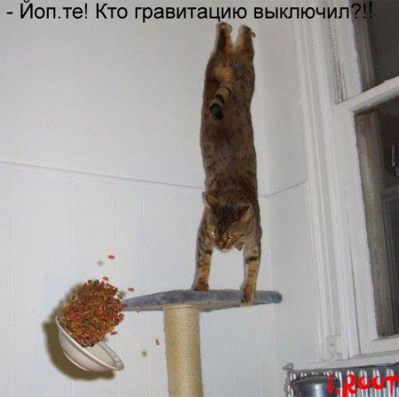 коты приколы 31 (450x447, 25Kb)