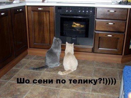 прикольные коты 41 (450x337, 31Kb)