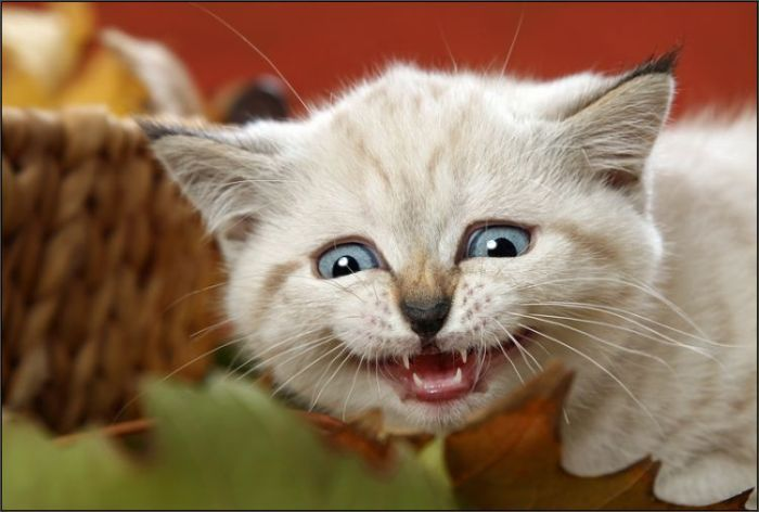 прикольные коты 43 (700x472, 42Kb)
