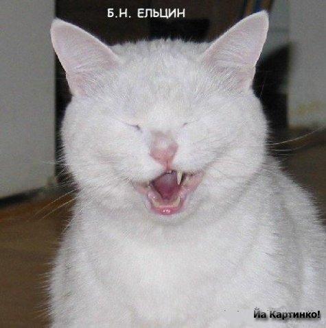 прикольные коты 45 (475x479, 37Kb)
