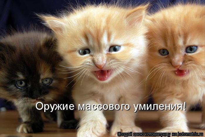 А вообще коты и кошки это милые