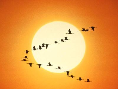 Хочется стать птицей и улететь в теплые края...