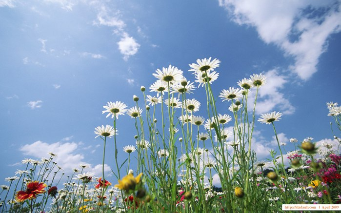 3640123_1440x900_Blue_Sky_Flowers_HM046_350A (700x437, 79Kb)