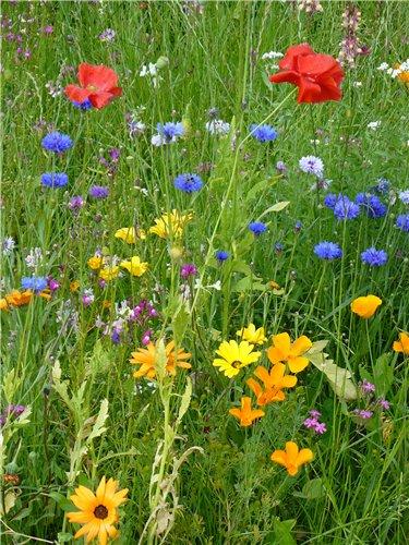 цветы (375x500, 83Kb)