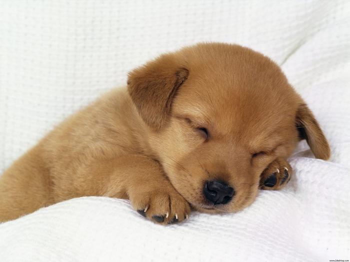 3368205_puppy (700x525, 213Kb)