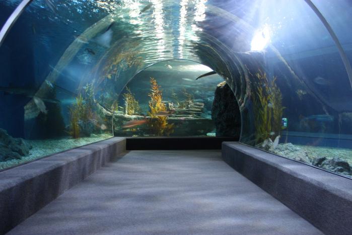 Thailand-Bangkok-2012-Изображение 508 (700x466, 216Kb)