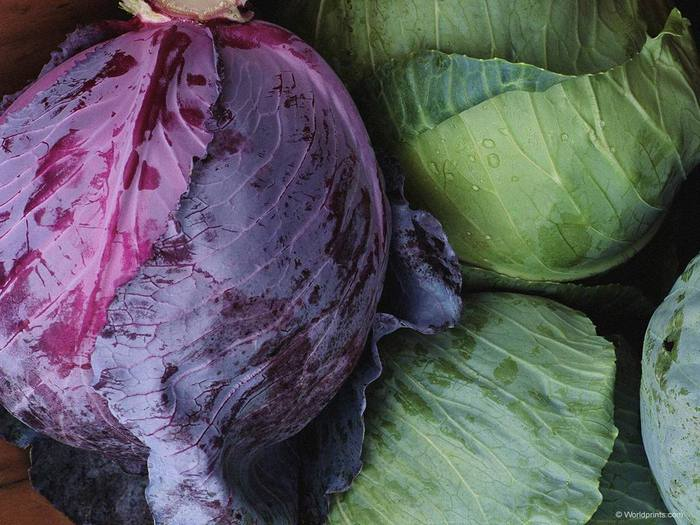cabbage-_1 (700x525, 67Kb)