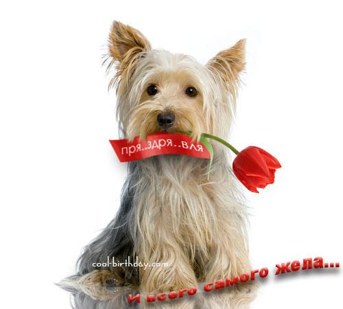 Собаки с цветами в зубах фото