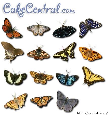 butterflies1 (432x461, 125Kb)