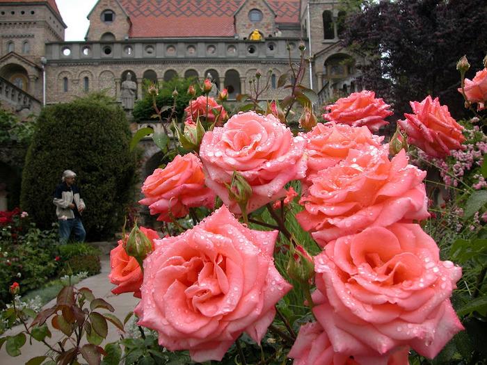 Замок Бори- Замок вечной любви (Bory var, Szekesfehervar) 34824