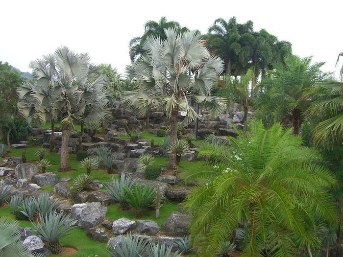 Парк Нонг Нуч (Nong Nooch Tropical Garden) 28333