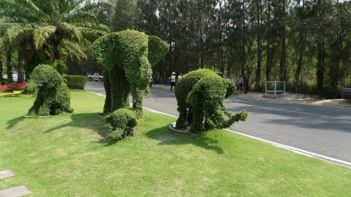 Парк Нонг Нуч (Nong Nooch Tropical Garden) 69690