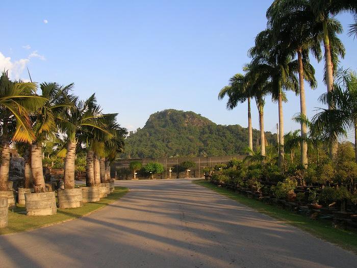 Парк Нонг Нуч (Nong Nooch Tropical Garden) 19043