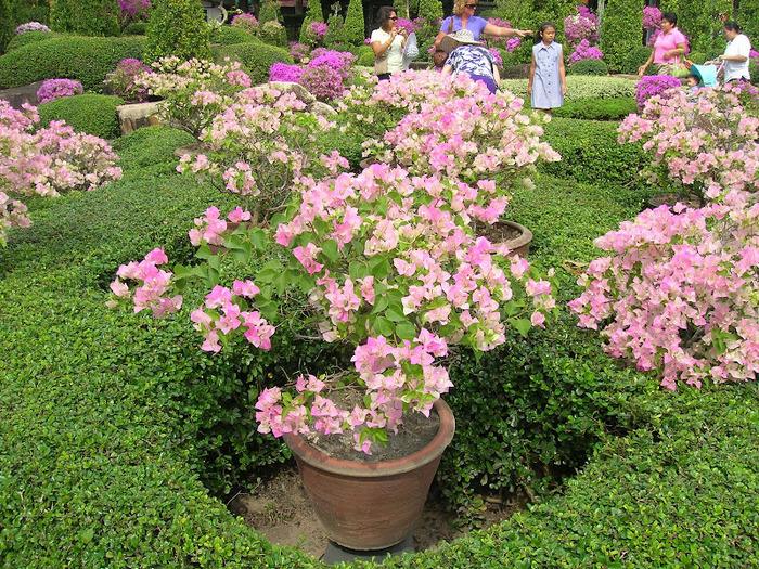 Парк Нонг Нуч (Nong Nooch Tropical Garden) 72155